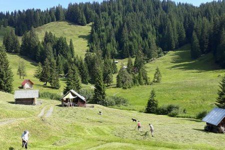 bergbauern-bei-der-arbeit-hotel-heckelmiller-1-767pxc